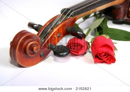 Violon And Rose 2