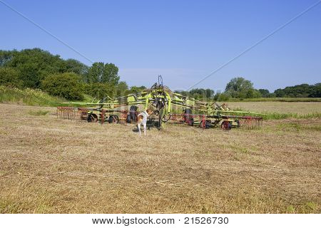 Haymaking Time