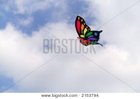 Mariposa cometa.