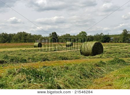 The Hayfield in a summer time
