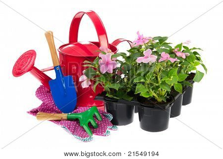 Black plastic tray with pink Busy Lizzy plants and a complete gardening equipment