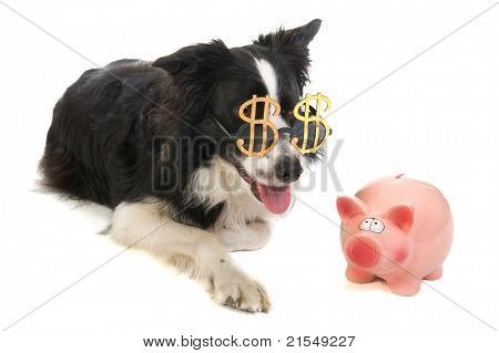 Portrait of a dog with dollar sunglasses and a piggy bank
