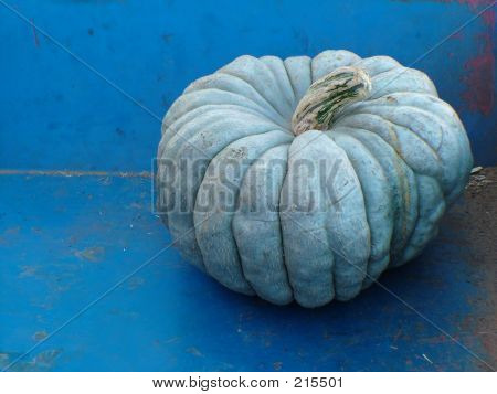 Blue Gray Pumpkin