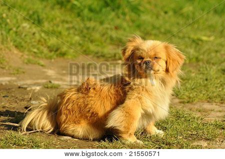 Beautiful small dog