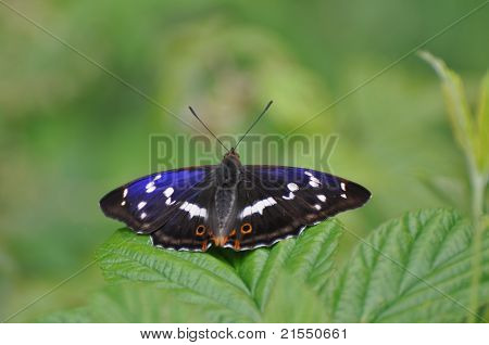 Beautiful Butterfly In Ukrainian Mountains