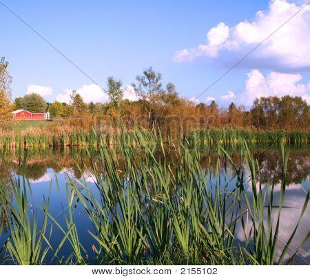 Farm Pond Reflections