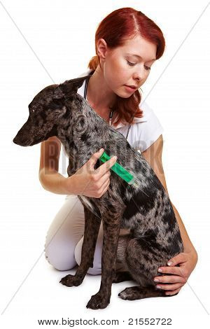 Dog Getting Injection At The Vet