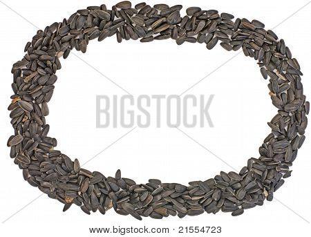 Frame Of Fresh Sunflower Seeds