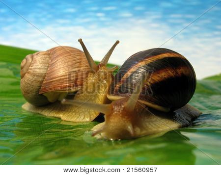 World Of Snails