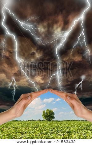 Two Hands Preserve A Green Tree Against A Thunder-storm