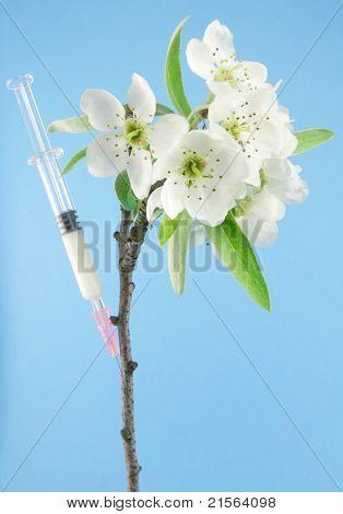 plant modification