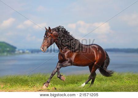 Horse Near Water