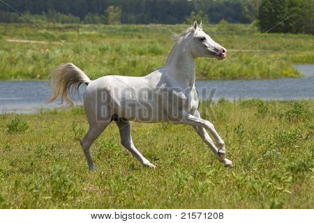 White Horse And Water