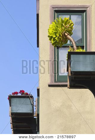 Detail of Flower Boxes and Window