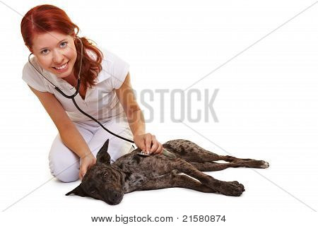 Female Vet Examing Sick Dog