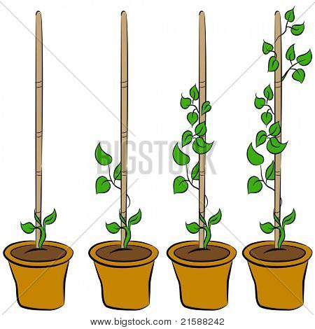 An image of the stages of a growing plant.