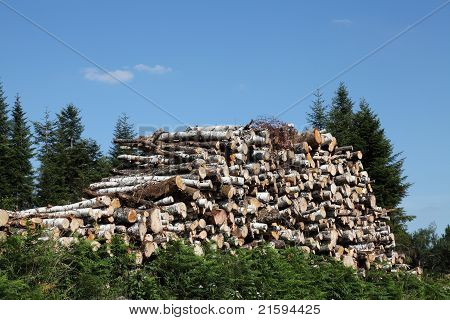 Natural Resources Timber Wood