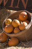 image of hayride  - Pretty pumpkins for sale at the Annual Pumpkin Festival in the valley - JPG