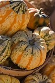 image of hayride  - Beautiful pumpkins at a local county fair - JPG