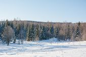 Taiga Wood In The Winter. Winter Taiga. The Siberian Wood In The Winter poster