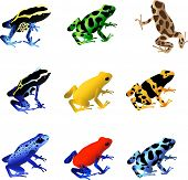 stock photo of dart frog  - A collection of 9 different species of poison dart frogs - JPG