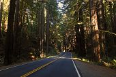 image of mendocino  - Highway 128 through the redwoods near Mendocino California - JPG