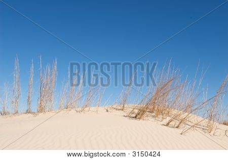 Sand Dunes With Tall Grass And A Blue Sky
