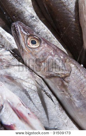Seefisch ausgesetzt