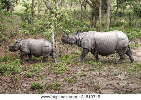 Rinoceronte selvagem em Chitwan, Nepal