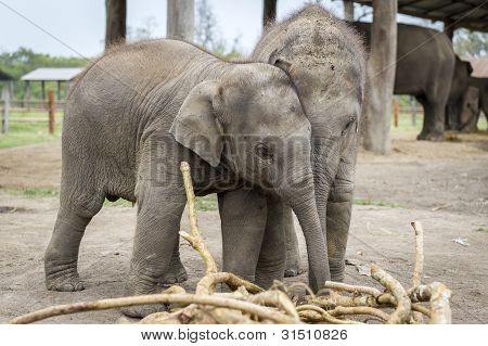 Small Elephants Are Playing