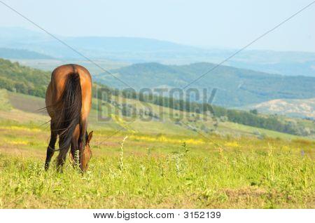 Einsam Pferd Weiden