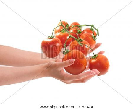 Two Woman Hands Holding Tomatos.