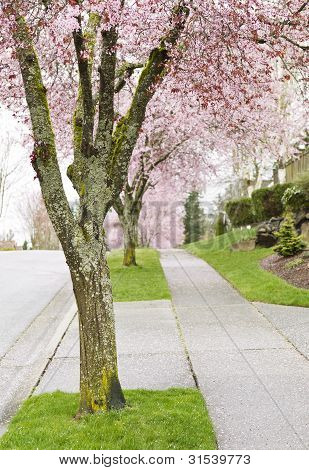 Calle cereza