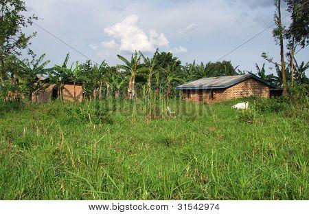 Around Rwenzori Mountains