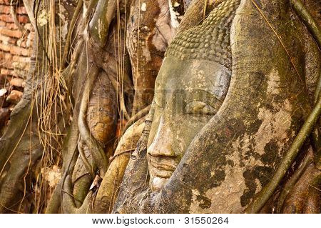 Some Part Of Buddha Statue In Root Of Tree