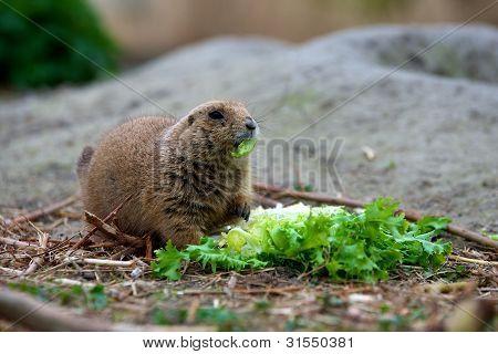 priaridog eating