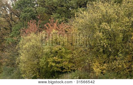 Autumn Foliage