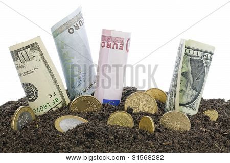 Money Grows From The Humus  Concept