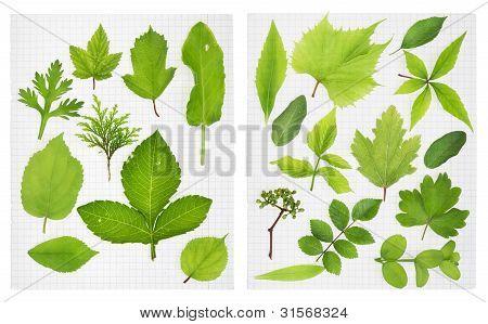 School Herbarium