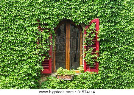 Certaldo (florence), Window