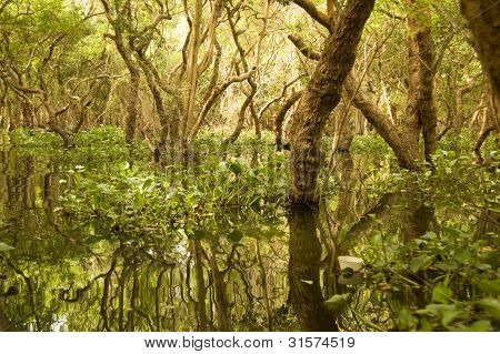 Flooded forest, Tonle Sap Lake, Cambodia