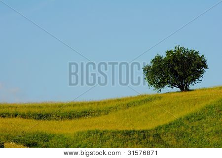 Slope and tree