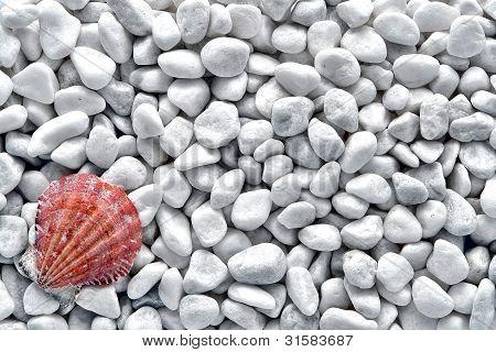Seashell On White Pebble Seashore Beach Background