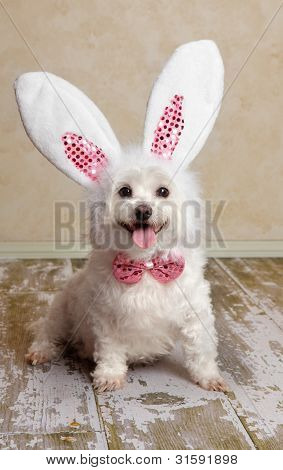 Puppy Dog Wearing Bunny Rabbit Ears Costume