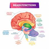 Brain Functions Vector Illustration. Labeled Explanation Head Organ Parts Scheme. Inner Side View Wi poster