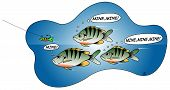 picture of bluegill  - Vector illustration of bluegill fighting over a lure - JPG