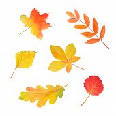 Colorful Autumn Foliage In Beautiful Style Isolated On White. Botanical Illustration. Autumn Waterco poster