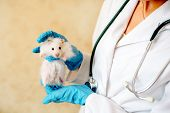 Hands Of Owner Holding Cute Little Hamster. Professional Vet Doctor Diagnosing Pet With Stethoscope. poster