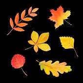 Colorful Autumn Foliage In Beautiful Style Isolated On Black Background. Botanical Illustration. Aut poster