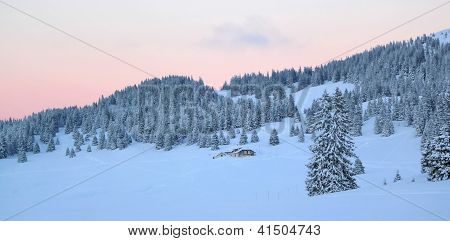 Sunset Over Fir Trees By Winter, Jura Mountain, Switzerland